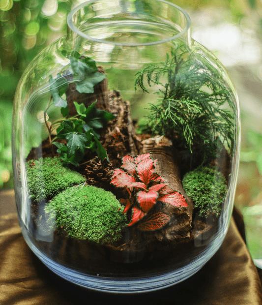 mini-terrarium